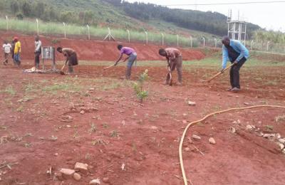 Compound Gardening